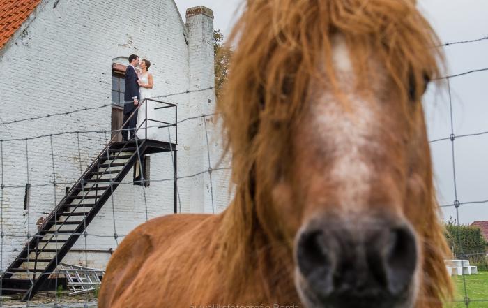 paard huwelijk
